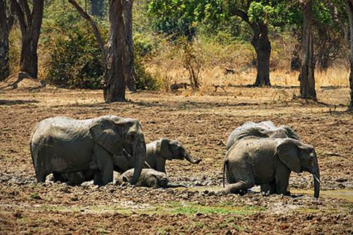 best african wildlife safari